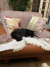 higa.sofa4.jpg